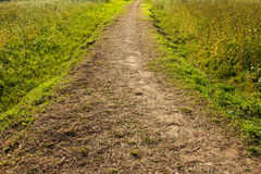 Wildness path Royalty Free Stock Photo