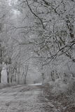Winter Wonderland Forest. In the netherlands royalty free stock image