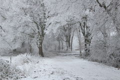 Winter Wonderland Forest. In the netherlands Stock Images