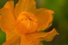 wildnis macrocosm Tautropfen auf schönen Blumen Risse, Hintergründe Stockbild