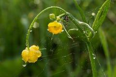 wildnis macrocosm Tautropfen auf schönen Blumen Risse, Hintergründe Lizenzfreies Stockfoto