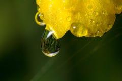 wildnis macrocosm Tautropfen auf schönen Blumen Risse, Hintergründe Stockbilder
