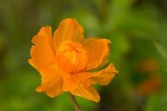 wildnis macrocosm Tautropfen auf schönen Blumen Risse, Hintergründe Lizenzfreie Stockfotos