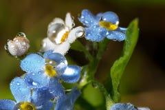 wildnis macrocosm Tautropfen auf schönen Blumen Risse, Hintergründe Stockfotografie