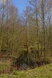 Wildnis mit Abzugsgraben und bloßen Ältestbäumen Lizenzfreie Stockfotos