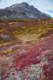 Wildnis-Tundra Stockbilder