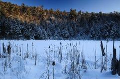 Wildnisgebiet Lilypad-Teich-, Pharoah Seen, Adirondack Forest Preserve, New York stockfotografie