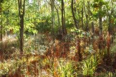 Wildnisweg mit sonnenbeschienem Laub Stockbilder