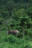 wilds слона Стоковое Изображение