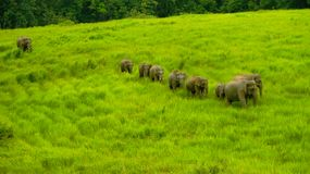 Wilds Elephant Royalty Free Stock Photo