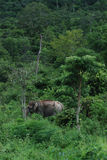 Wilds Elephant Stock Image