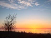 Wilg bij zonsopgang royalty-vrije stock afbeelding