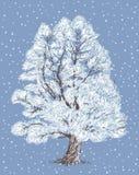 Wilg in de winter Stock Foto's