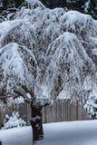 Wilg in de winter wordt in sneeuw wordt behandeld bevroren die royalty-vrije stock afbeeldingen