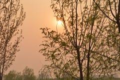 Wilgen bij Zonsondergang in park royalty-vrije stock foto
