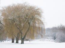 Wilgen in de winter stock fotografie