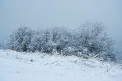 Wilgen - Eerste Sneeuw stock fotografie