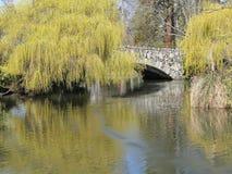 Wilgen en brug die in vijver worden weerspiegeld Stock Foto