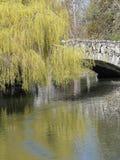 Wilgen en brug die in vijver worden weerspiegeld Royalty-vrije Stock Foto's