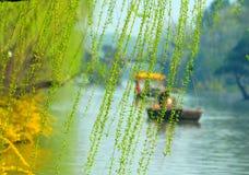 Wilgen langs riverbank royalty-vrije stock foto's