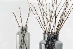 Wilgentakken in glasvazen op een houten grijs tafelblad Selectieve nadruk royalty-vrije stock foto's