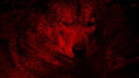 Wilk Warczy Krwionośnego Czerwonego abstrakt zdjęcie wideo