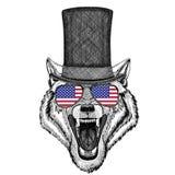 Wilka Psi dzikie zwierzę jest ubranym butla odgórnego kapelusz i szkła z usa flaga Jednoczącymi stanami Ameryka zaznaczamy Zdjęcia Royalty Free