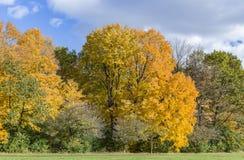 在Wilket小河公园的秋天风景在多伦多 免版税库存图片