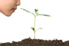 It will be our next oxygen sou. The small plant will grow into big tree in the future and they will provide us the oxygen in the air we breathe every single time Royalty Free Stock Photos
