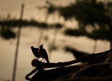 Silhouette pictures of birds stock photos
