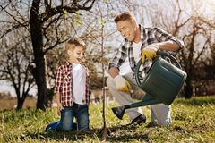 Little boy looking at young plant. It will grow. Smiling kid keeping mouth opened and standing on knees near tree while talking to his father Royalty Free Stock Photos