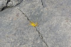 Grass in the crack of a granite rock. Stock Photos