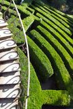 Willa Pisani, Stra, Włochy - zielony labitynt Zdjęcie Stock
