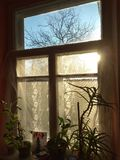 Willage home window. With sun rays and houseplants royalty free stock image