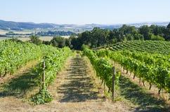 willamette виноградника долины стоковая фотография rf