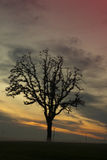 Willamette Tal-Sonnenuntergang Stockfotografie