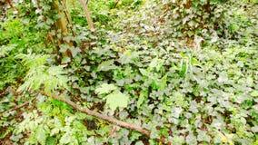 Willekeurig kreupelhout 1 royalty-vrije stock afbeelding