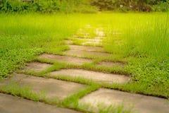 Willekeurig patroon van springplankgang op ruw groen grasgazon in de tuin, onder zonlicht royalty-vrije stock foto's