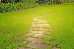 Willekeurig patroon van springplankgang op ruw groen grasgazon in de tuin, onder zonlicht in ochtend stock afbeeldingen