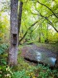 Willekeurig vogelhuis in het bos stock fotografie