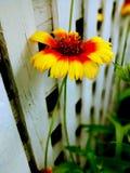 Willekeurige bloem in werf Stock Foto's