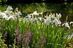 Willekeurige Bloemen Stock Foto's