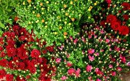 Willekeurige bloemenachtergrond Royalty-vrije Stock Foto's