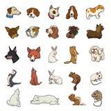 Willekeurige dierlijke inzameling Stock Afbeelding