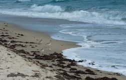 Willets i Sandpipers w kipieli fotografia stock