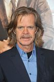 William H Macy Royalty Free Stock Image