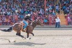 Cowgirl and horse race to finish line at barrel racing competition. Williams Lake, British Columbia/Canada - July 2, 2016: horse and rider race to the finish royalty free stock photography