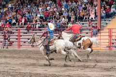 Two horses and riders race neck and neck to the finish line. Williams Lake, British Columbia/Canada - July 1, 2016: men race neck and neck as they cross the Royalty Free Stock Photo