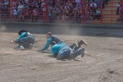 Cowboys are dragged though dirt while trying to catch a wild horse royalty free stock photos