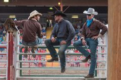 Three cowboys sit on chutes and watch stampede stock photography